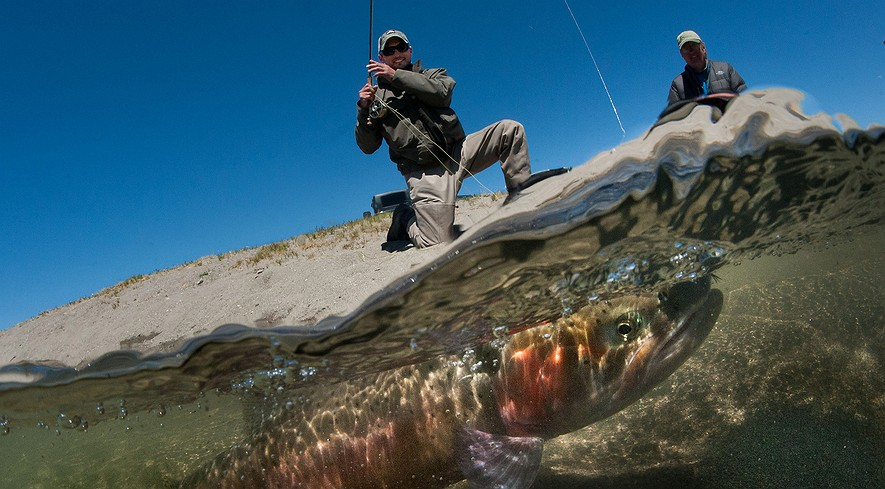 Newsela scientists save big trout from near extinction for Sacramento bee fishing line