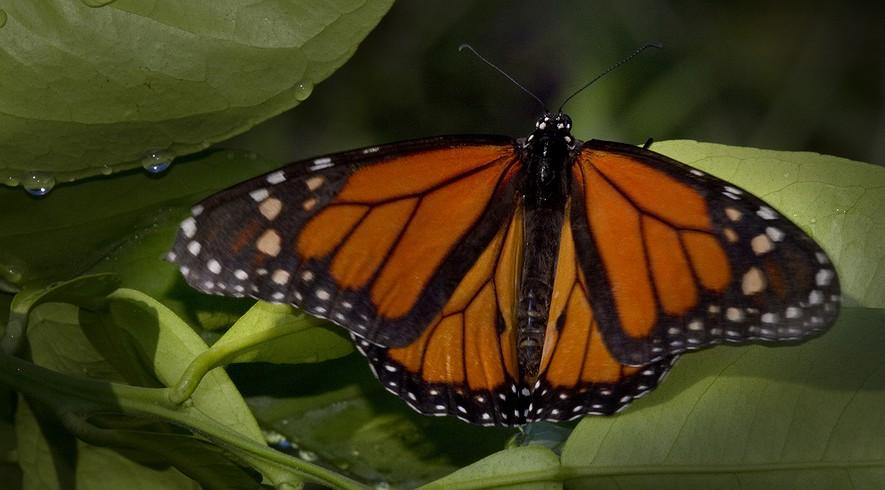 EPHS Honors Biology Blog Foley