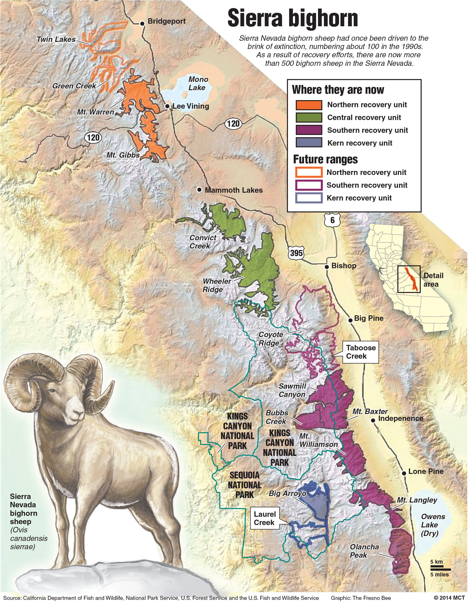 Newsela - California\'s bighorn sheep brought back from the brink of ...